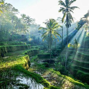 fotobehang-bali-rijstveld