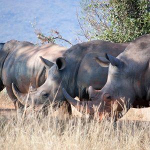 fotobehang-dieren-neushoorn-in-het-wild
