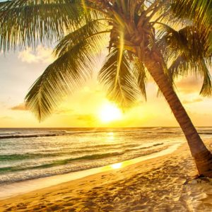 fotobehang-palbomen-strand-sunset