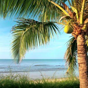 fotobehang-palmbomen-strand