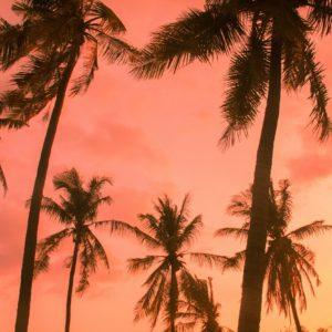 sunset-foto-palmbomen