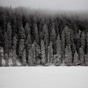 Natuur zwart wit foto winter