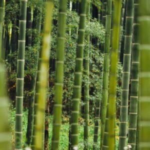 Foto 1 Bamboe