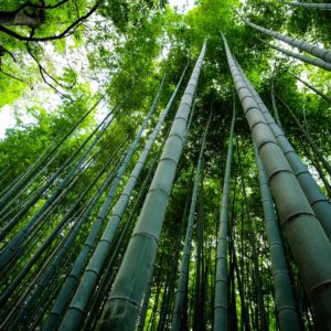 Foto 7 Bamboe