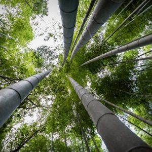 Foto 5 Bamboe