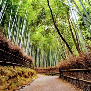 Foto 3 Bamboe