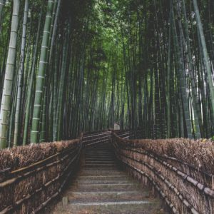 Foto 6 Bamboe