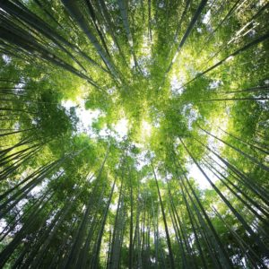 Foto 4 Bamboe