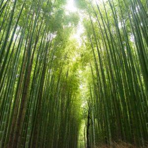 Foto 2 Bamboe