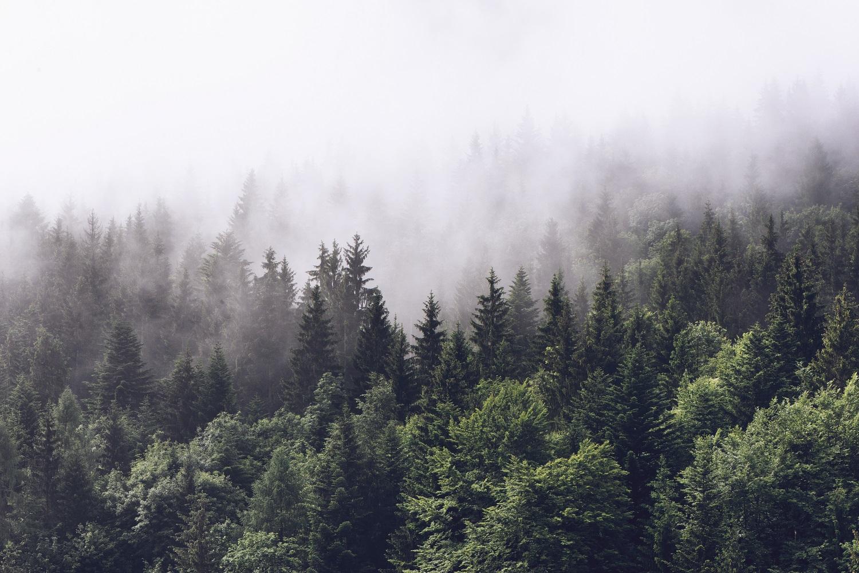 fotobehang bos met mist