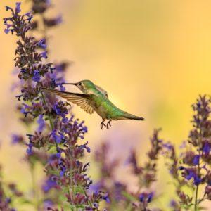 Foto 13 Vogels