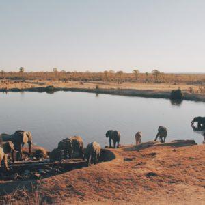 Foto 10 Olifanten