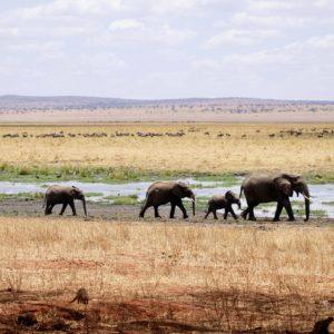 Foto 3 Olifanten