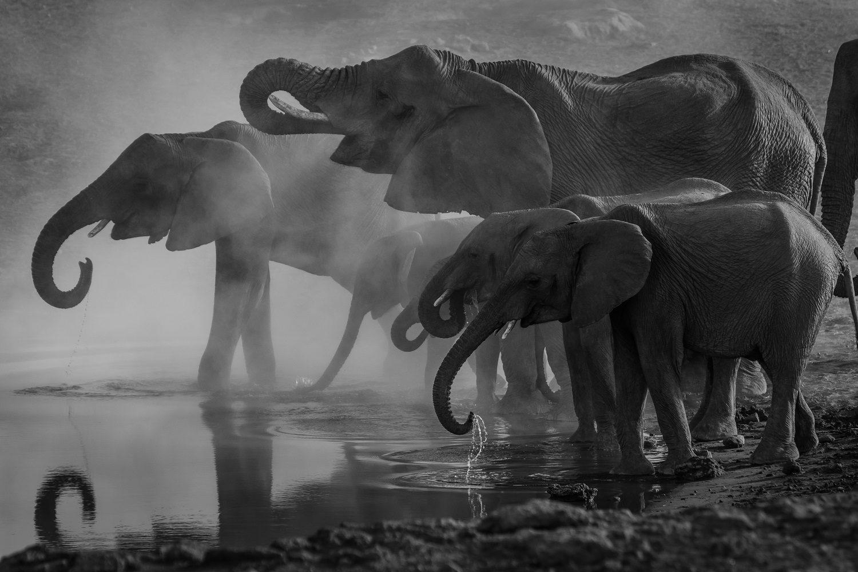 fotobehang olifanten zwart wit