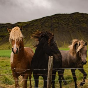 Foto 6 Paarden