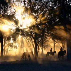 Foto 5 Paarden