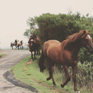 Foto 2 Paarden