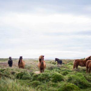 Foto 4 Paarden
