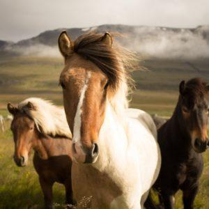 Foto 11 Paarden