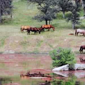 Foto 9 Paarden