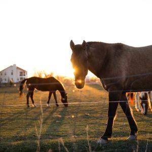 Foto 8 Paarden