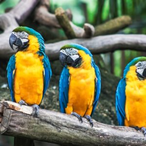 Foto 11 Vogels