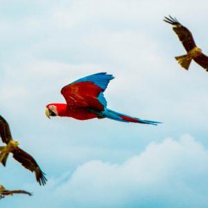 Foto 12 Vogels