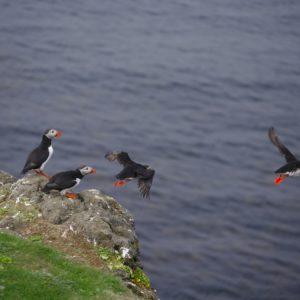 Foto 10 Vogels