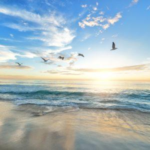 Foto 15 Strand Zee Duinen