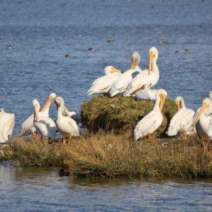 Foto 7 Vogels