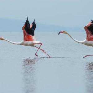 Foto 6 Vogels