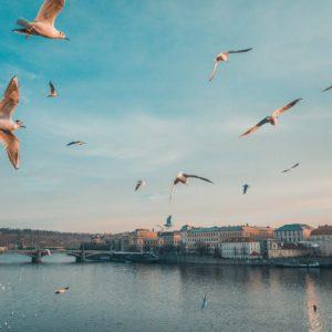 Foto 8 Vogels