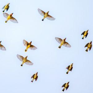 Foto 4 Vogels