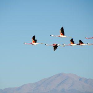 Foto 5 Vogels