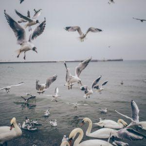 Foto 3 Vogels