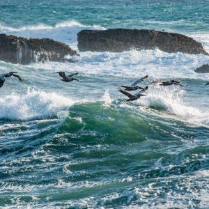 Foto 2 Vogels