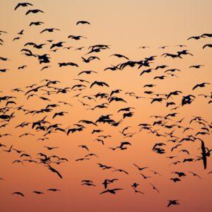 Foto 18 Vogels