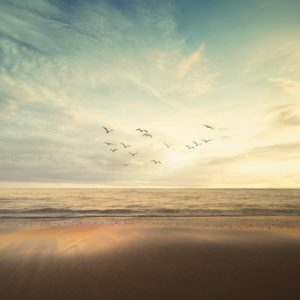 Foto 17 Vogels