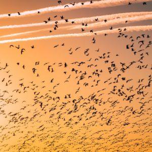 Foto 1 Vogels