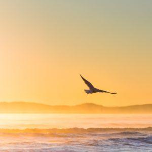Foto 15 Vogels