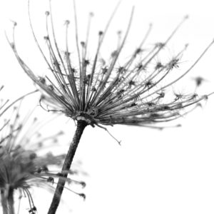 Foto 6 Zwart Wit