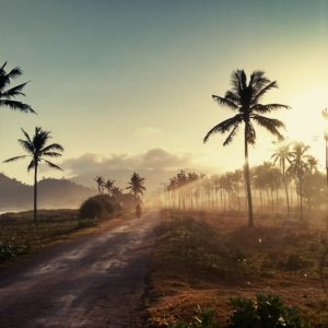 Foto 18 Palmbomen