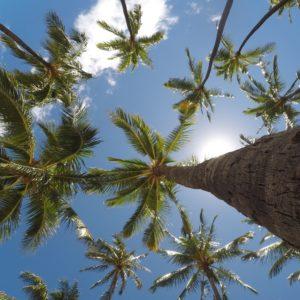 Foto 16 Palmbomen