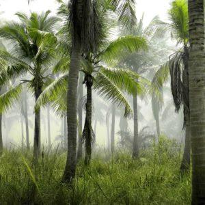 Foto 17 Palmbomen
