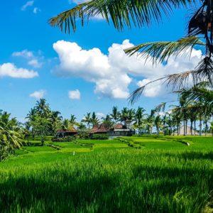 Foto 15 Palmbomen