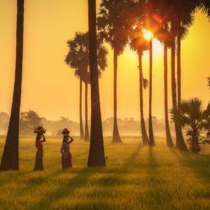 Foto 2 Palmbomen