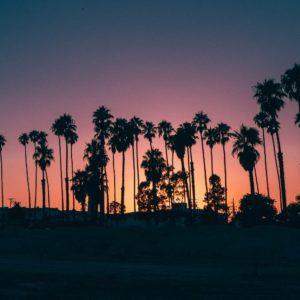 Foto 20 Palmbomen