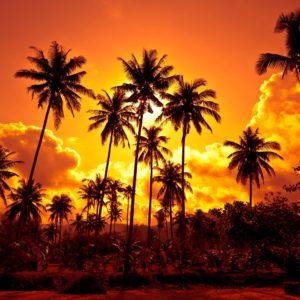 Foto 6 Palmbomen