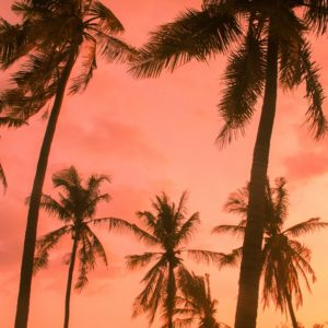 Foto 19 Palmbomen