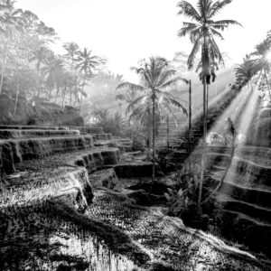 Foto 8 Palmbomen